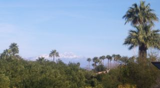 Palms and snow_Scottsdale, AZ